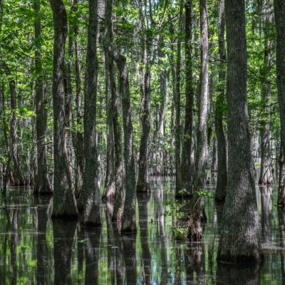 Le bayou
